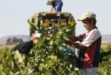 La renta agraria cae el 3,4% este año por los altos costes