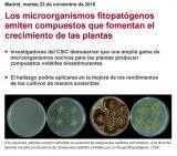 Los microorganismos fitopatógenos emiten compuestos que fomentan el crecimiento de las plantas